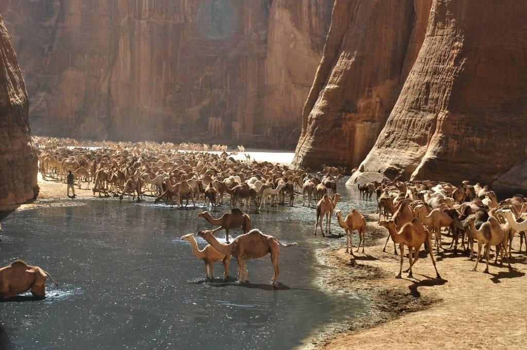 oasis-guelta-darchei