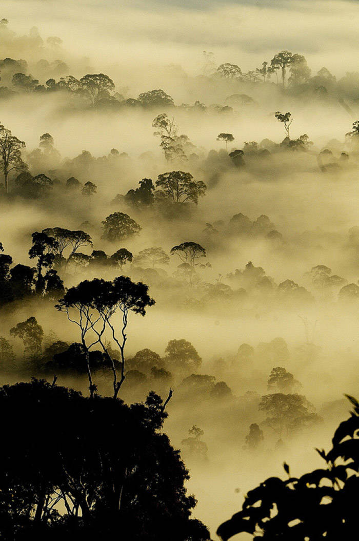 La Isla de Borneo