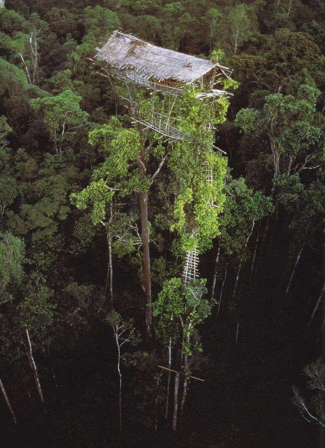 Casa e un arbol de la tribu Korowai