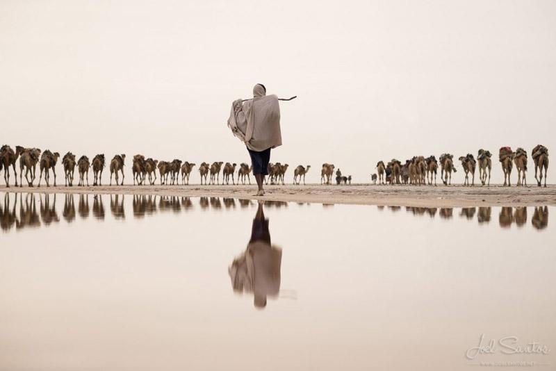 Minas de sal y caravana de camellos, Etiopía.
