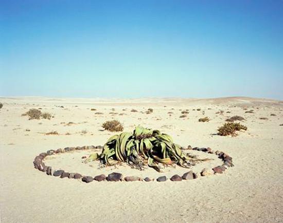 Flora en desierto de Namibia