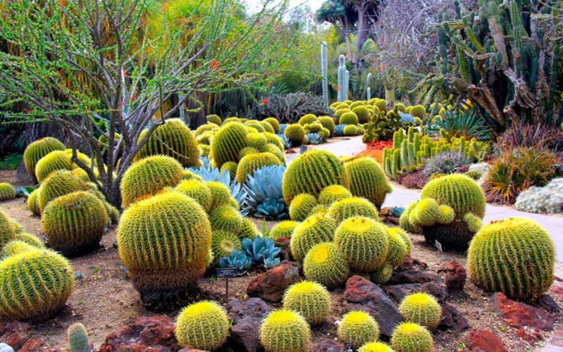 Decoración con cactus y suculentas: Ideas para decorar - Nomadbubbles