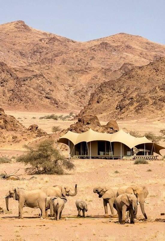 Elefantes en el desierto de Namibia