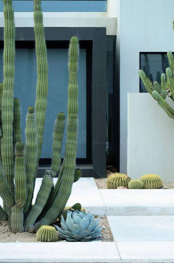 Decoraci n con cactus y suculentas nomadbubbles for Cactus de exterior