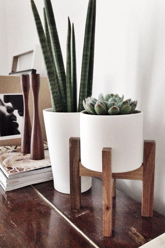 cactus y suculentas en la decoración