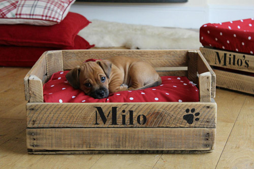 Cama hecha con una caja de madera para la mascota