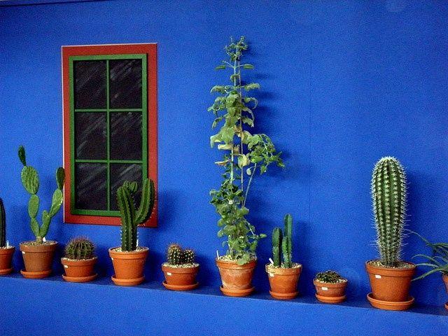 Diferentes especies de cactus