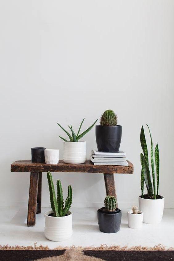 Decoraci n con cactus y suculentas ideas para decorar - Macetas para cocina ...