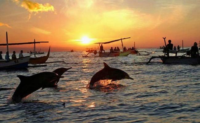 Delfines en la playa de Lovina Beach