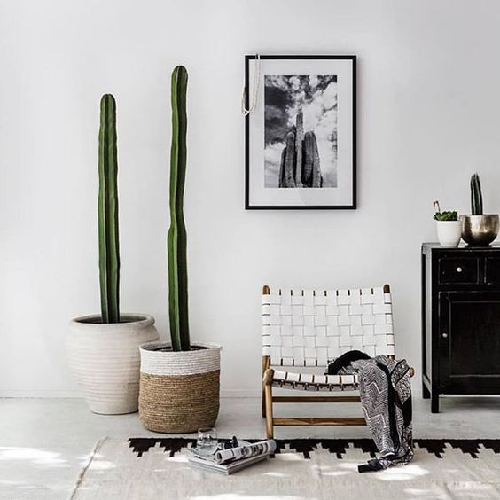 decoraci n con cactus y suculentas ideas para decorar nomadbubbles. Black Bedroom Furniture Sets. Home Design Ideas