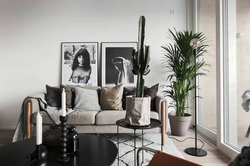 Cactus en la decoración