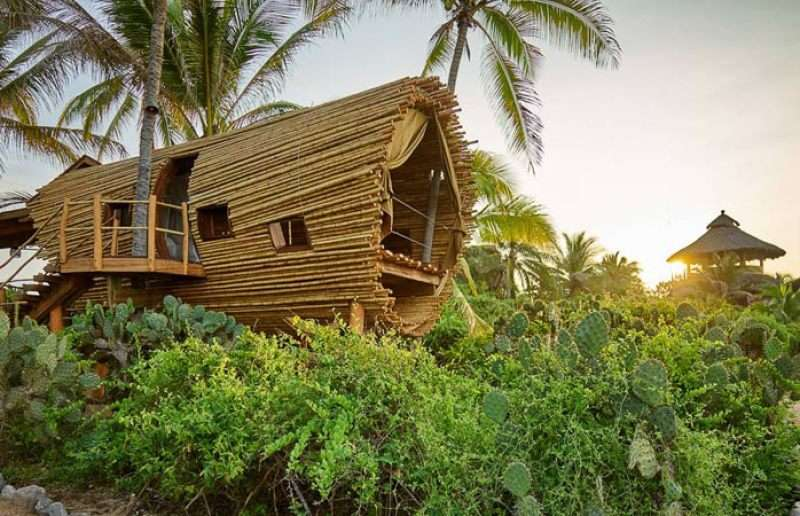 Casa de bambú en un arbol