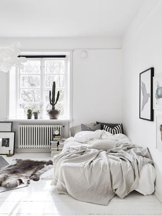 Interior con cactus