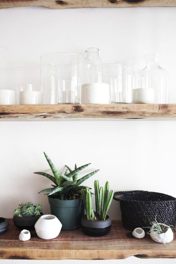 Decoración de la cocina con cactus y suculentas