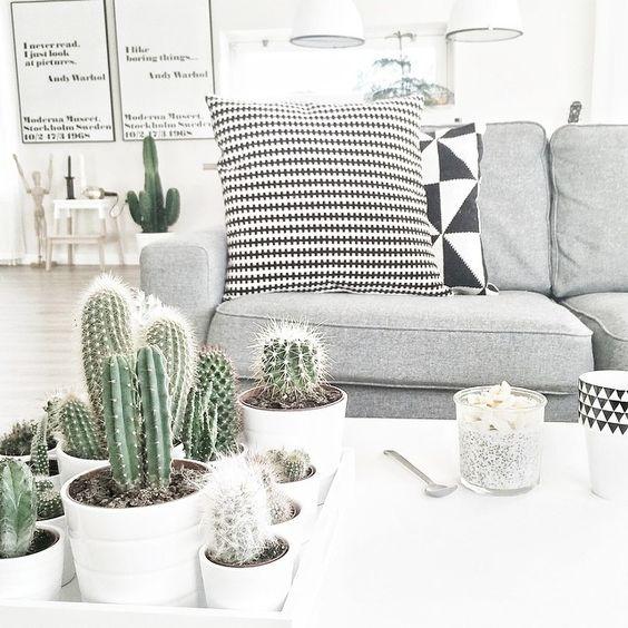 Decoración de interiores con cactus