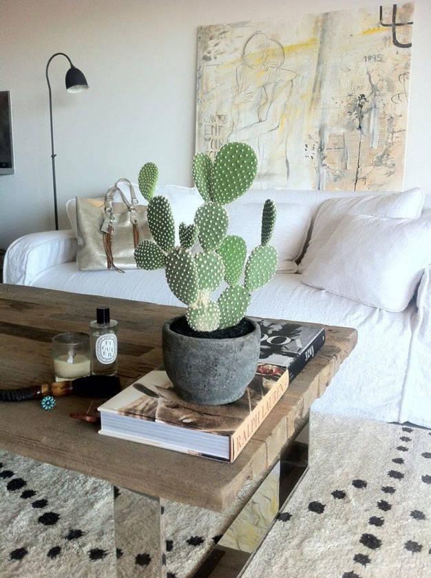 Decoración de interiores con cactus y suculentas