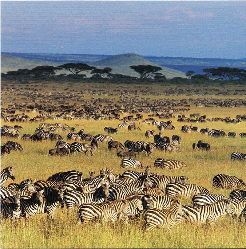 La Gran Migración del serengeti en tanzania