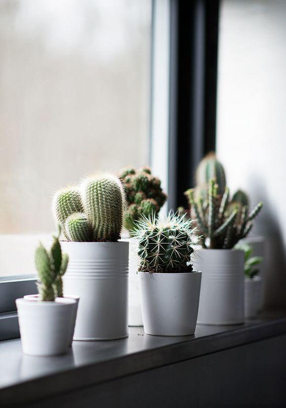 Pequeños cactus para decorar la cocina