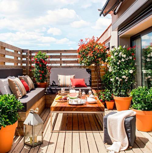 Plantas y flores para decorar la terraza de casa