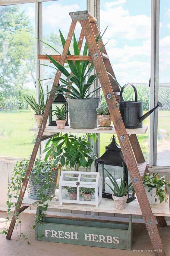 Plantas suculentas en las baldas de una escalera decorativa