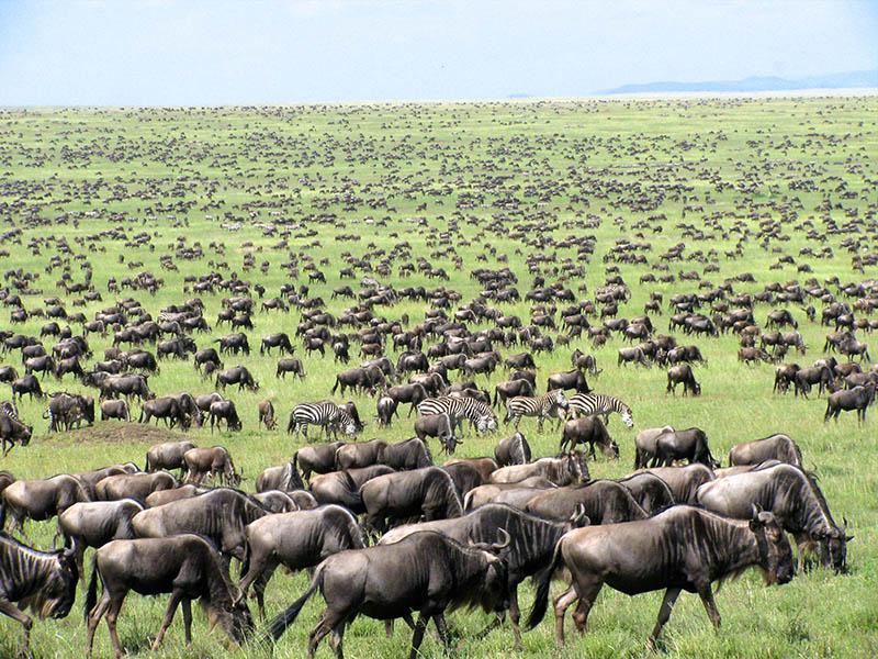Qué hacer en el Parque Nacional del Serengeti