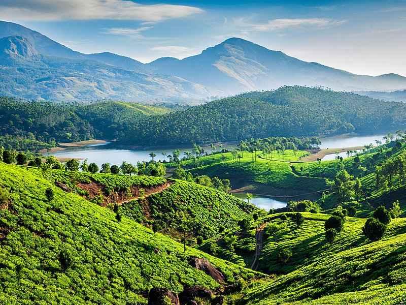 Plantaciones de te en kerala, India