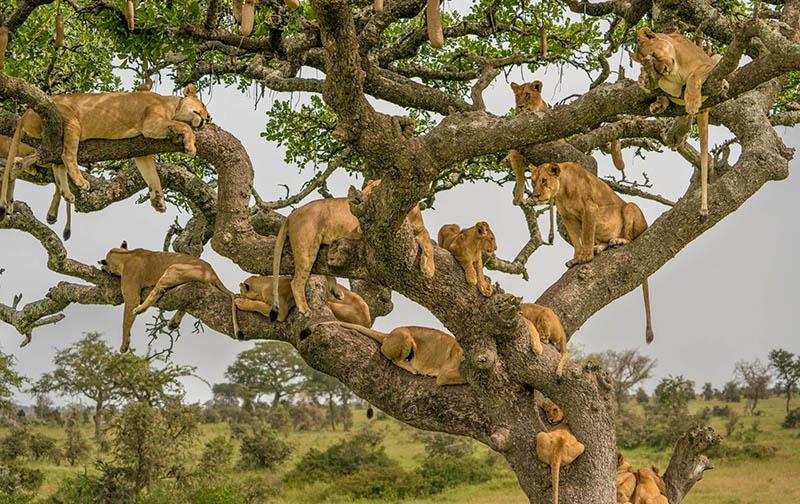 Cuántos días son ideales para el Serengeti