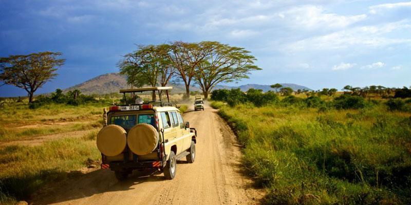 Cómo moverse por el Parque Nacional del Serengeti